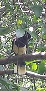 20161212_124518-1-1  Vogel in selva