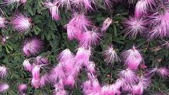 20161216_155540  Bloemen in  Botanische tuin