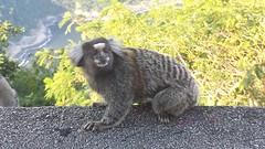 20161229_181000  14.wildlife bij Pao