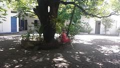 25.DS onder mangoboom