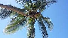 38.Palmboom