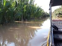 133.Kanaal met palmen