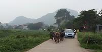 511.Buffels op de weg