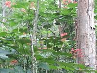 520.Jungleflora