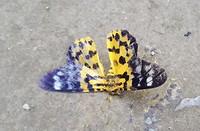 545.Vlinder