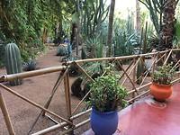 Botanische tuin.