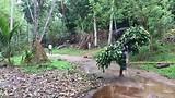 150 kg per dag aan groenvoer per olifant.
