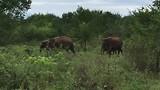 Olifanten in Udawalawe Nationaal Park.
