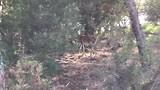 De herten zijn ( gelukkig!) schuw.