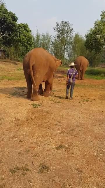 Dit gebeurd er nou als je op olifanten rijd!!!