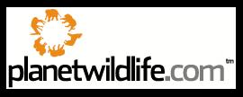 PlanetWildlife Group