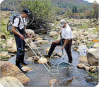 Interns with nets in stream