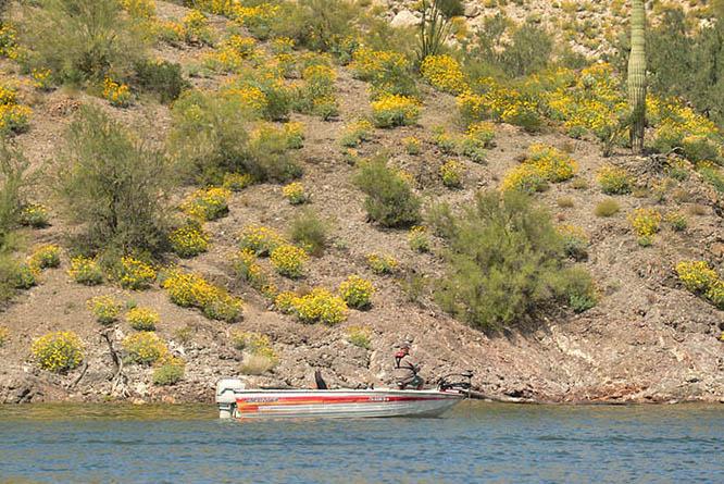 Azgfd for Bartlett lake fishing report