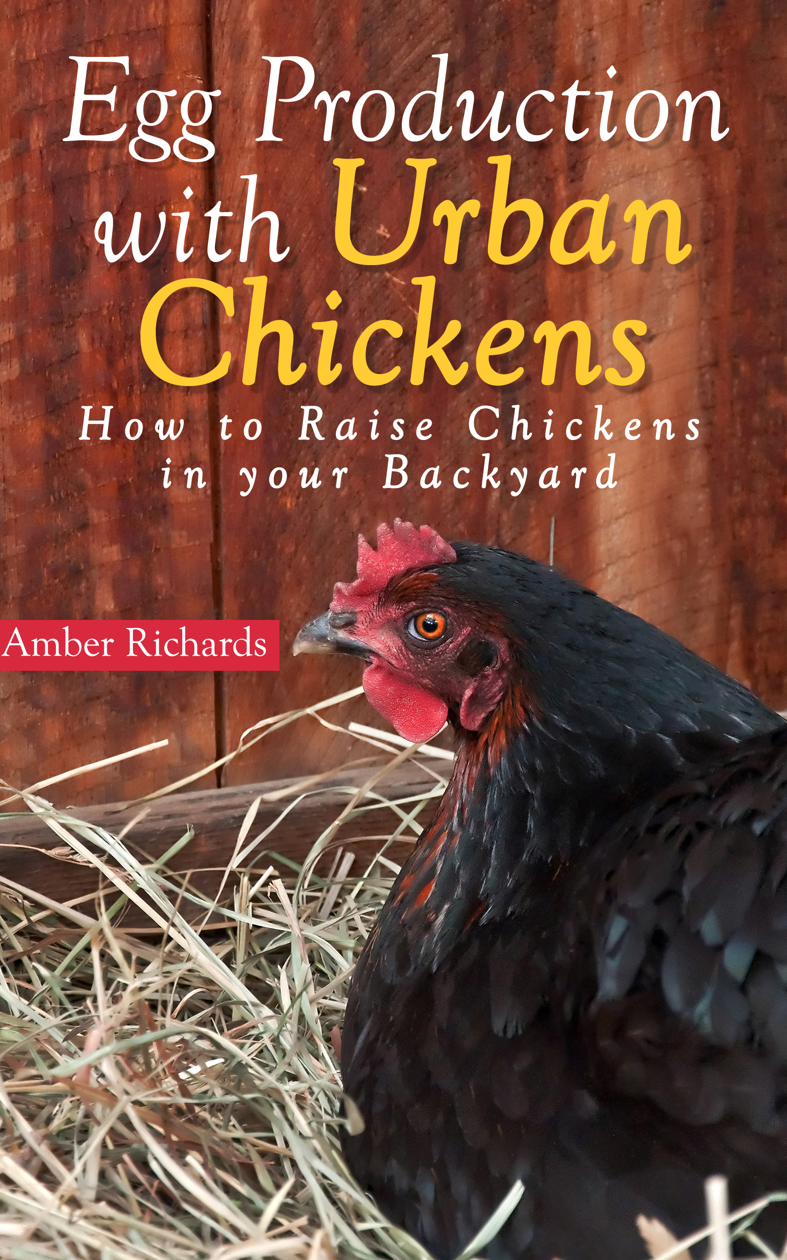 Egg production with urban chickens: how to raise chickens in your backyard
