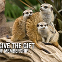 The San Diego Zoo: Membership
