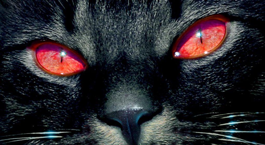 The Phantom Black Cat of Washington