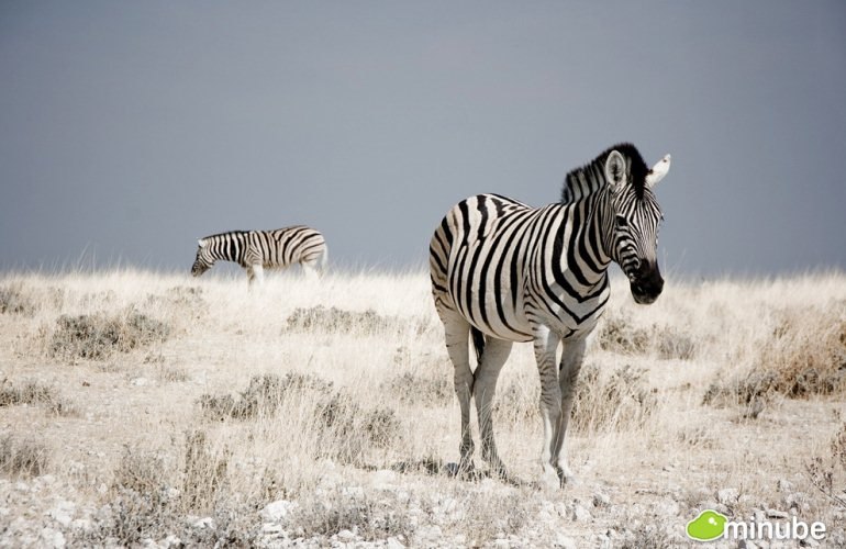 2-The 35 Most Spectacular National Parks on Planet Earth- Etosha
