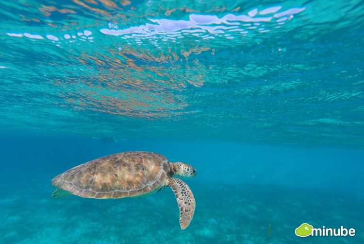 13-The 35 Most Spectacular National Parks on Planet Earth-Tobago Cays Marine Park