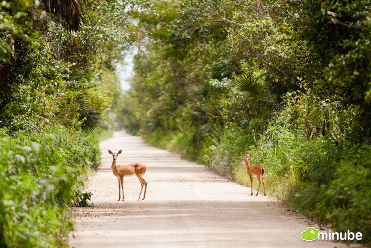 14.) The Everglades