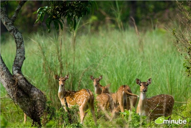 27.) Chitwan National Park