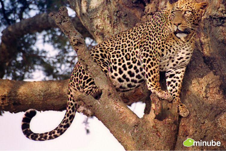 31.) Serengeti National Park