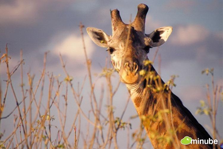 34.) Kruger National Park