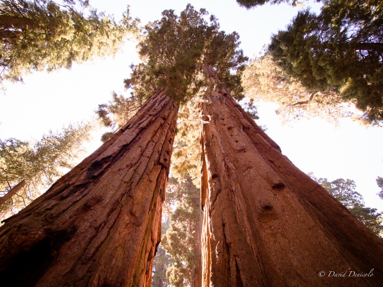 6.) The Sequoia Trees