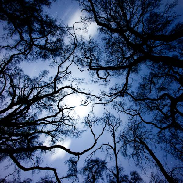Ford Of Ocala >> 10 Most Haunted Forests in California