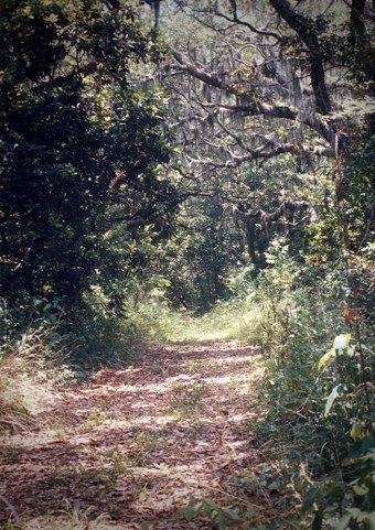 8 - Wiccademous Grave - 10 Most Haunted Hikes in Florida