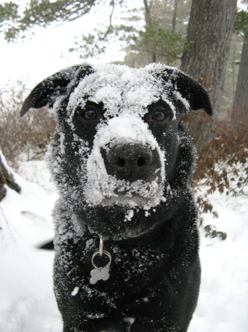 Silly snow face dog - 50 Heartwarming Pictures Of The Silliest Dogs To Ever Go Hiking