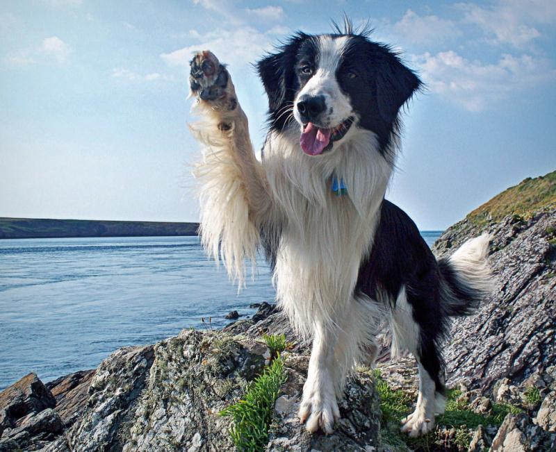 Hola - 50 Heartwarming Pictures Of The Silliest Dogs To Ever Go Hiking