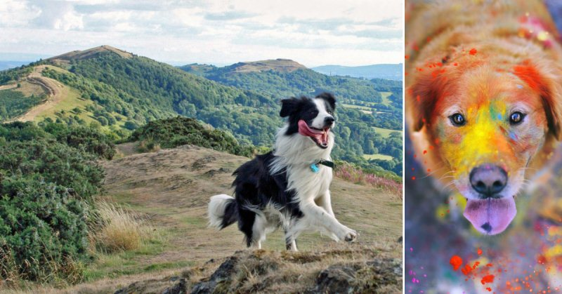 50 Silliest Dogs To Ever Go Hiking