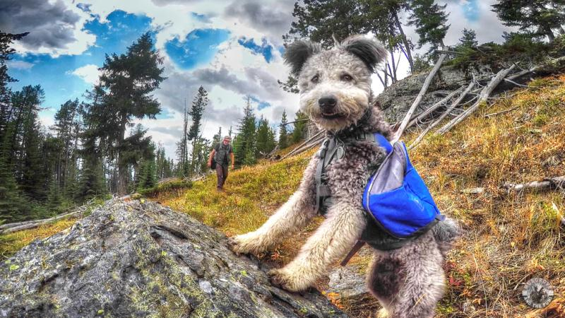 Pumi - 50 Heartwarming Pictures Of The Silliest Dogs To Ever Go Hiking