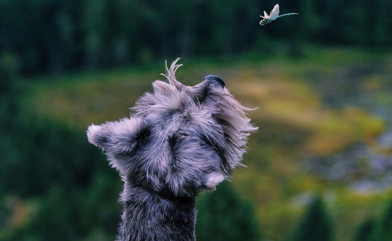Butterfly dog - 50 Heartwarming Pictures Of The Silliest Dogs To Ever Go Hiking