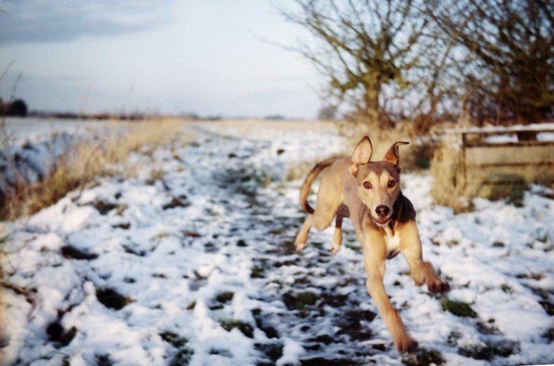 Run like a Dog - 50 Heartwarming Pictures Of The Silliest Dogs To Ever Go Hiking