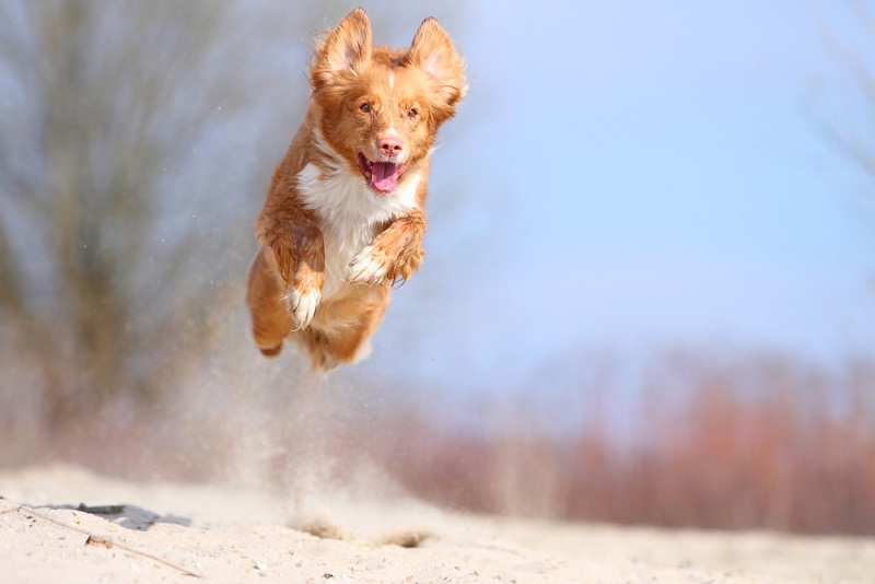 Sand - 50 Heartwarming Pictures Of The Silliest Dogs To Ever Go Hiking