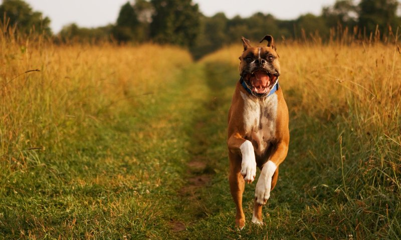 Rawwr - 50 Heartwarming Pictures Of The Silliest Dogs To Ever Go Hiking
