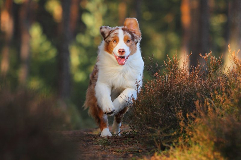 Running dogster - 50 Heartwarming Pictures Of The Silliest Dogs To Ever Go Hiking