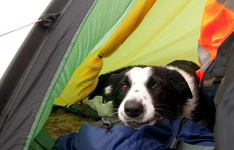 Tent dog