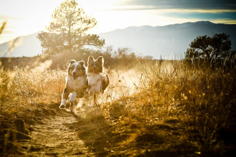 Race dogs! - 50 Heartwarming Pictures Of The Silliest Dogs To Ever Go Hiking