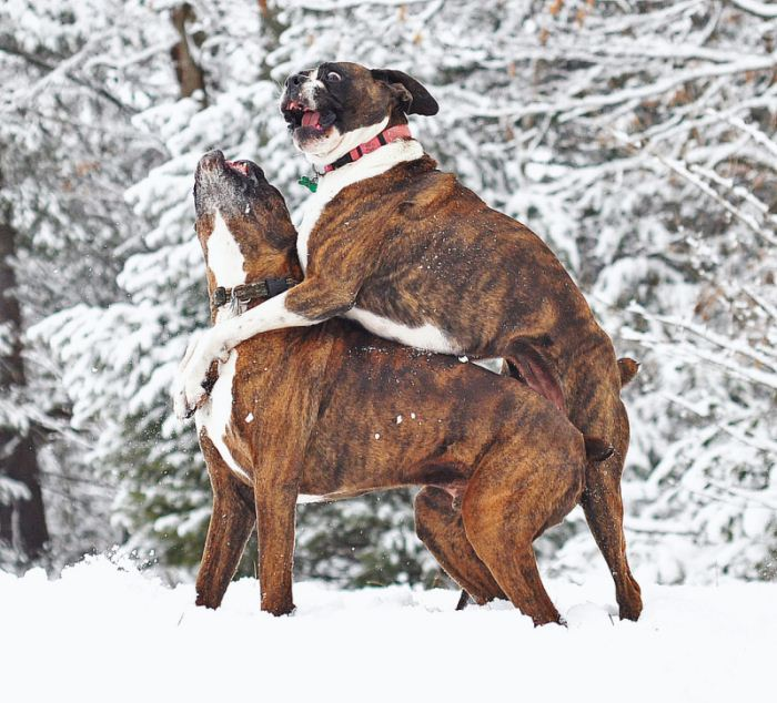 get off my back - 50 Heartwarming Pictures Of The Silliest Dogs To Ever Go Hiking