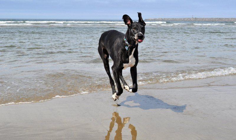 Silly Dog beach