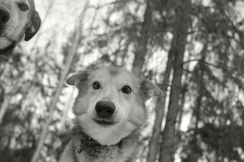 Camera dogs