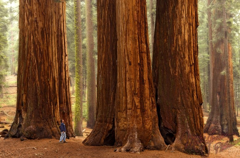 5) Sequoia and Kings Canyon National Parks - 10 Exhilarating Adventure Vacations In California