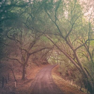 3 - Morgan Territory Road - 10 Haunted Hikes Northern California