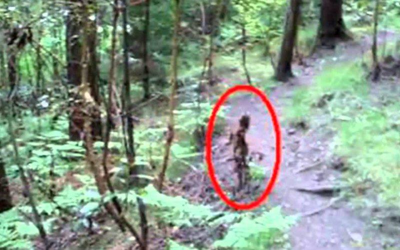 7 - Duendes - Paranormal Creatures 8