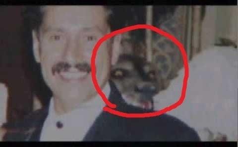 paranormal creature