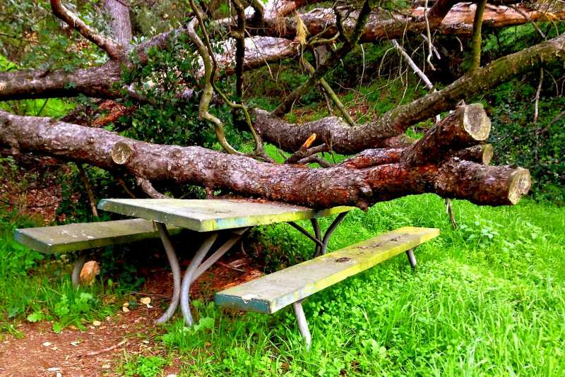 The Haunted Picnic Table #29 at Griffith Park