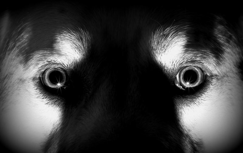 True Paranormal Stories: Dog's Spirit Returns