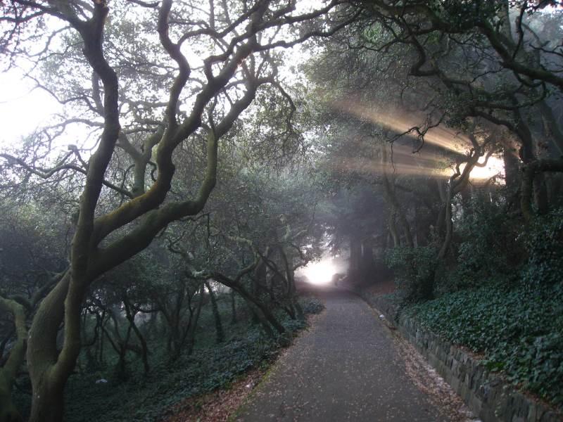 Haunted Hiking Trail in Buena Vista Park San Francisco